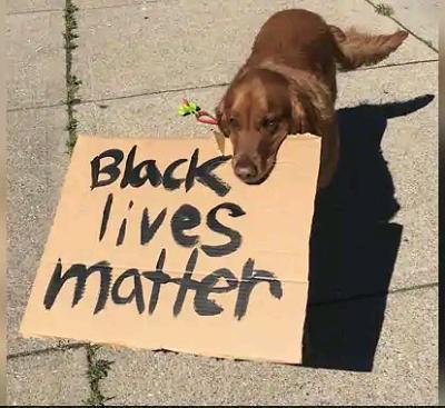 """Dog filmed holding """"black lives matter"""" sign at US protest"""