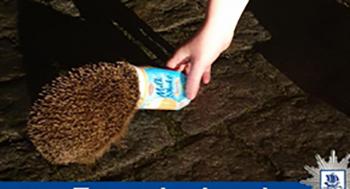 Police rescue hedgehog with head stuck in milkshake cup