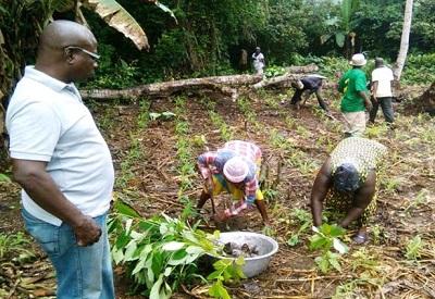 Greenglobe Ghana plants 2000 economic trees at Anfoeta Tsebi