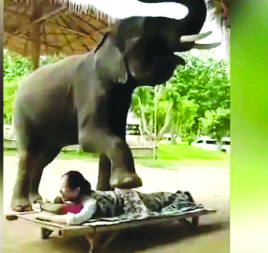 'Elephant massage' attracts mixed reactions from public