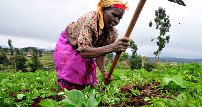 Supporting women in agribusiness to succeed