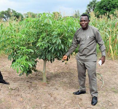 HTU develops 'resilient' baobab seedling