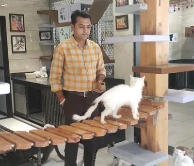 Man Opens 'cat garden' for 200 cats